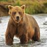 1430576_96541473 bear
