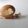 365993_6166 egg shell