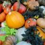havest thanksgiving holiday season